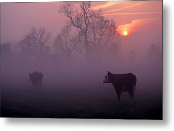 Cows At Sunrise Metal Print