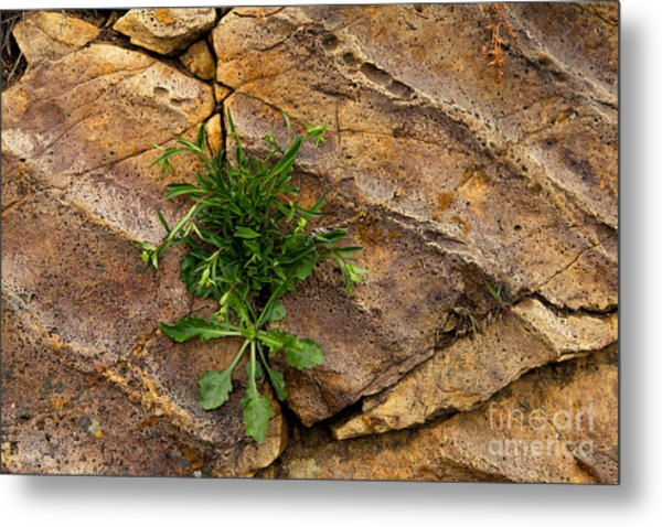 Crack  In The Wall Metal Print