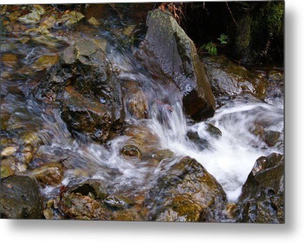 Creek Scene On Mt Tamalpais Metal Print