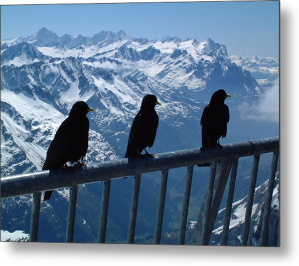 Crows On Top Of Mount Titlis Switzerland Metal Print