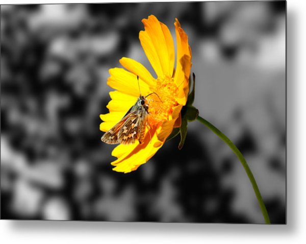 Cute Butterfly On Yellow Gerbera Daisy Metal Print