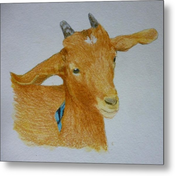 Cute Goat Pet Portrait 5 X 7 Inch Watercolor You Provide The Picture Or Idea Made To Order  Metal Print