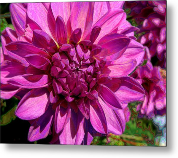 Dahlia Describes The Color Pink Metal Print