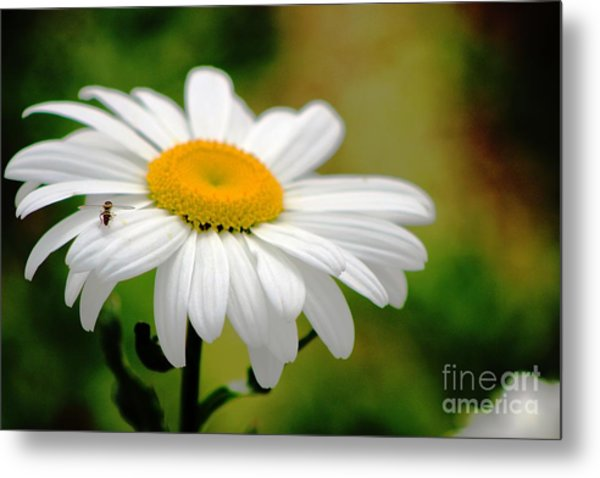 Daisy And The Bee Metal Print