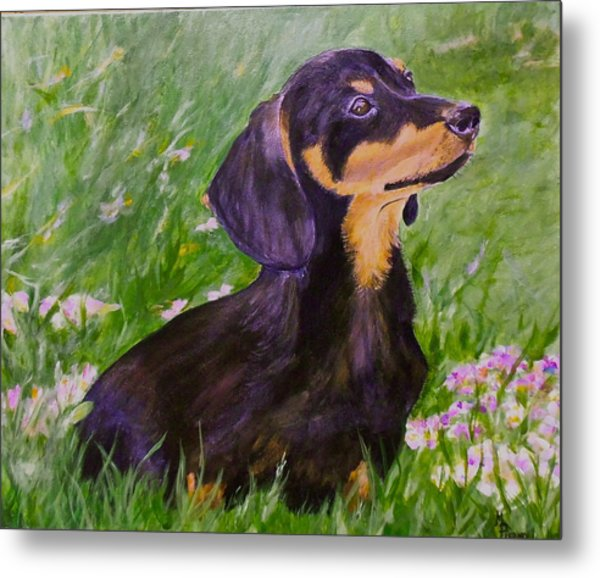 Daisy In Clover Metal Print