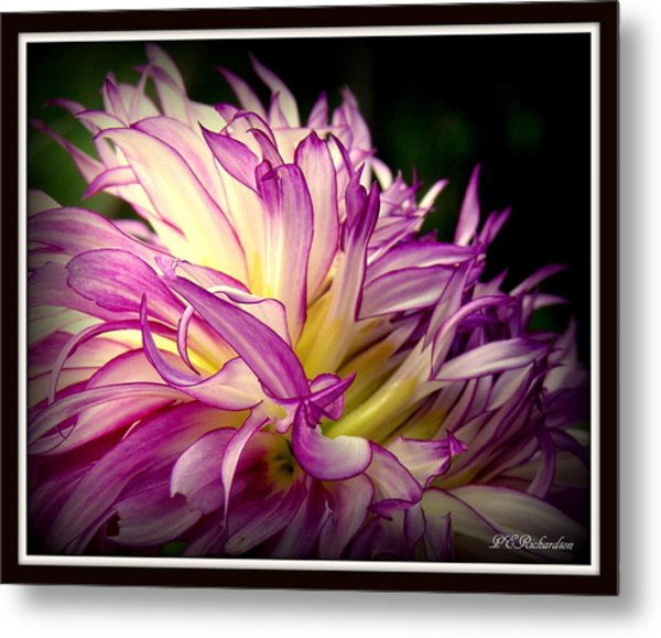 Dally Metal Print