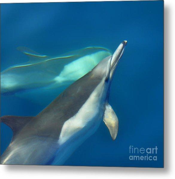 Dana Point Dolphins Ascending Metal Print