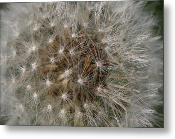 Dandelion Fairy Seeds Metal Print