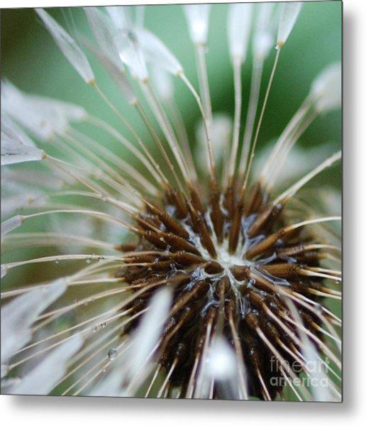 Dandelion Tears Metal Print