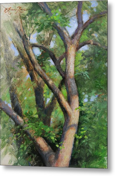 Dappled Woods Metal Print by Anna Rose Bain