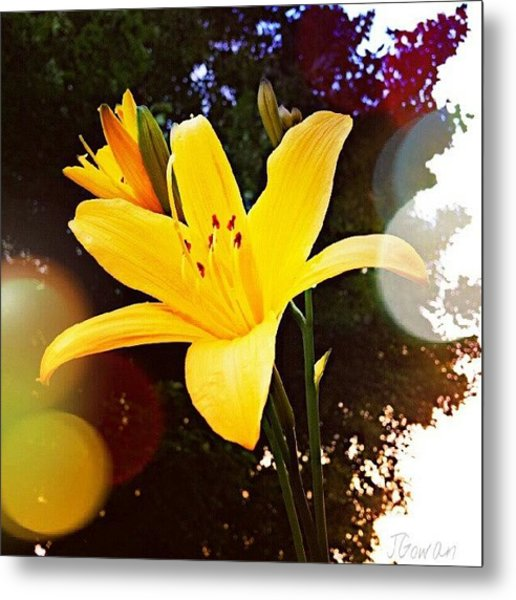 Day Lily II. #daylily #lily #flowers Metal Print