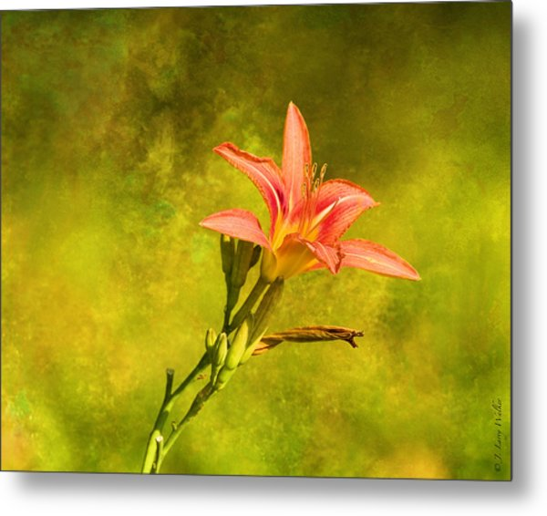 Daylily All Alone Metal Print by J Larry Walker