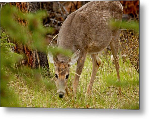 Deer 1661 Metal Print by Larry Roberson