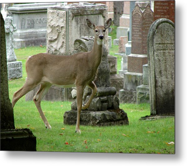 Deer Among The Headstones Metal Print