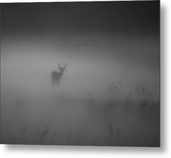 Deer In The Fog Metal Print by Nicholas Palmieri