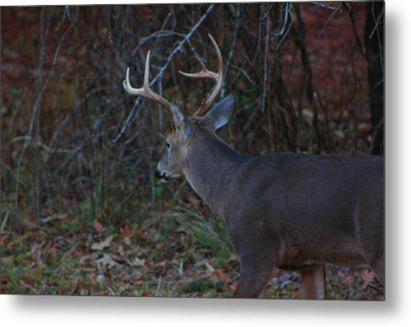 Deer Metal Print by Jake Busby