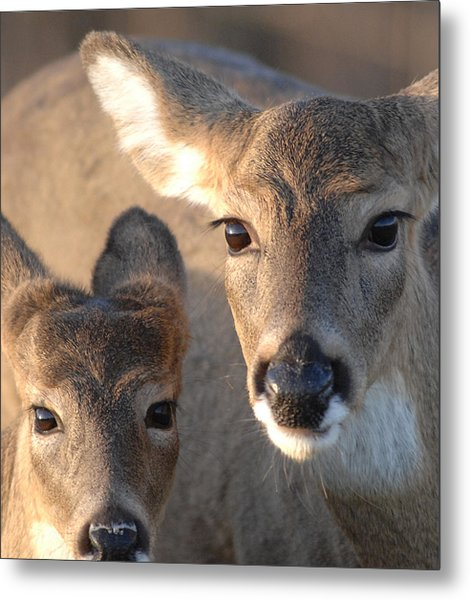 Deer With Young Metal Print