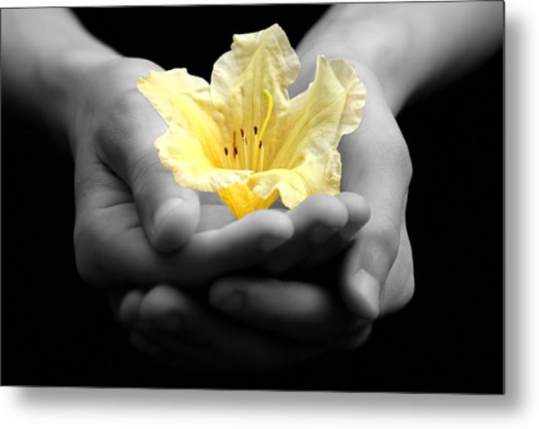 Delicate Yellow Flower In Hands Metal Print