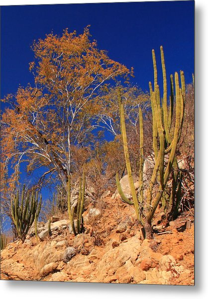 Desert Colors Metal Print