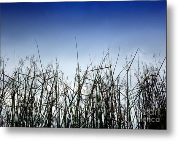 Desert Grass Metal Print by Antoni Halim