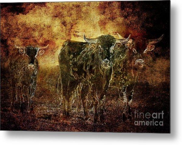 Devil's Herd - Texas Longhorn Cattle Metal Print