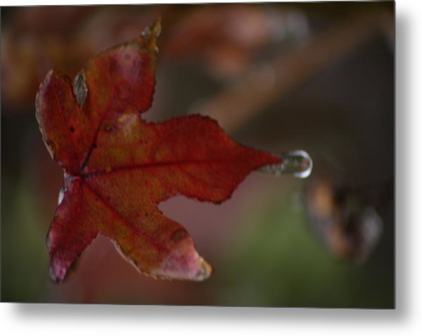 Dew Drop Metal Print