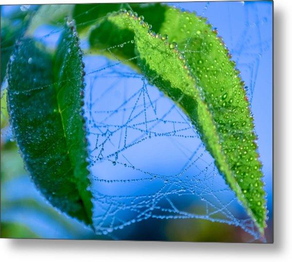 Dew Droplets Metal Print by Brian Stevens