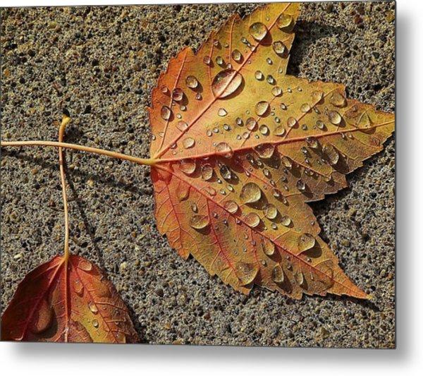 Dew On The Maple Leaf Metal Print