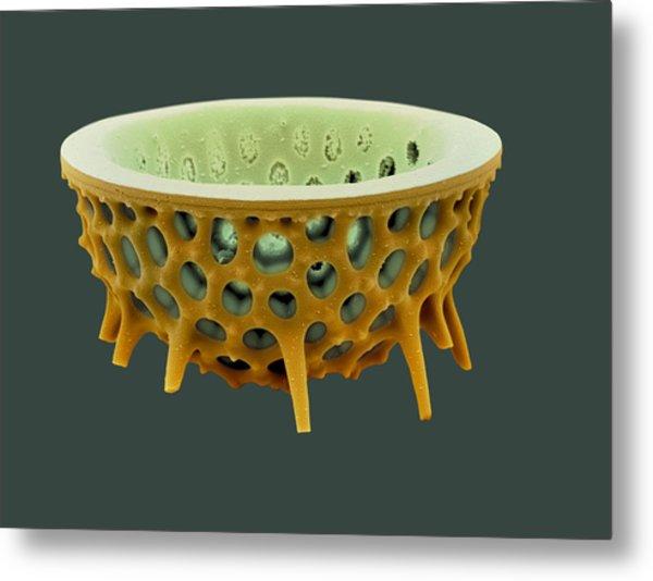 Diatom, Sem Metal Print by David Mccarthy