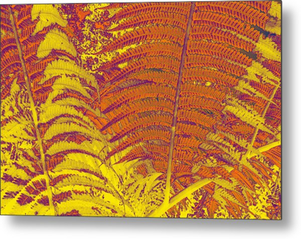 Digital Ferns Metal Print by Colleen Cannon