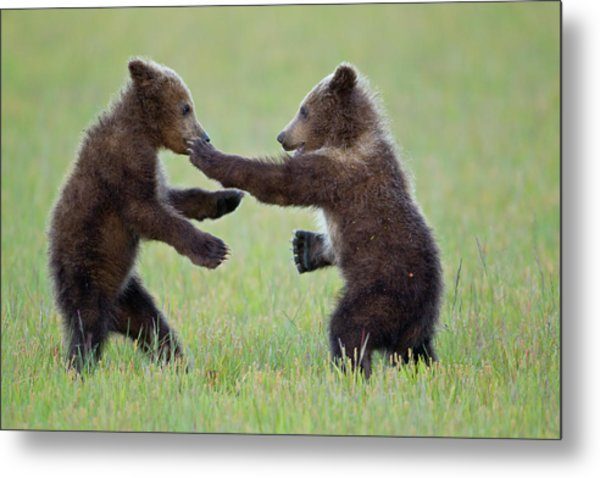 Disco Cubs Metal Print
