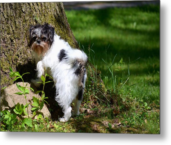 Dog And Tree Metal Print