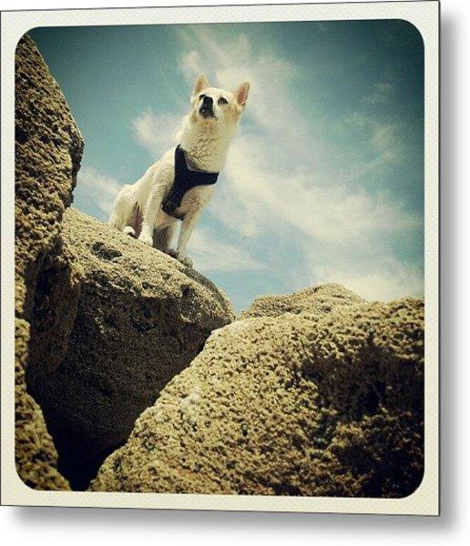 #dog #cute #beach #photography #ocean Metal Print