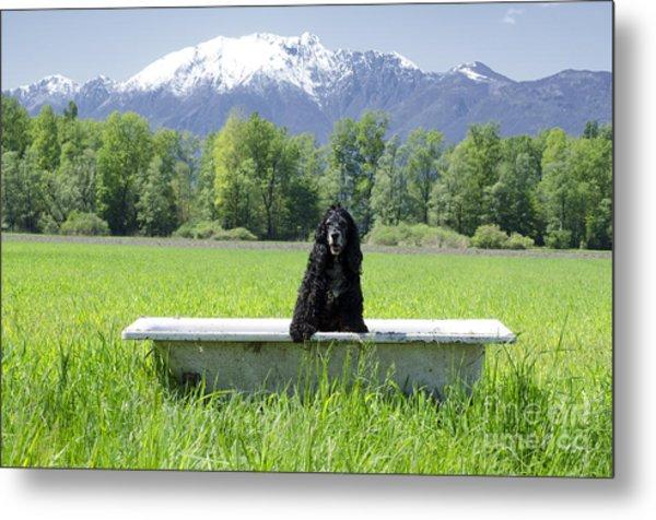 Dog In Bathtub Metal Print