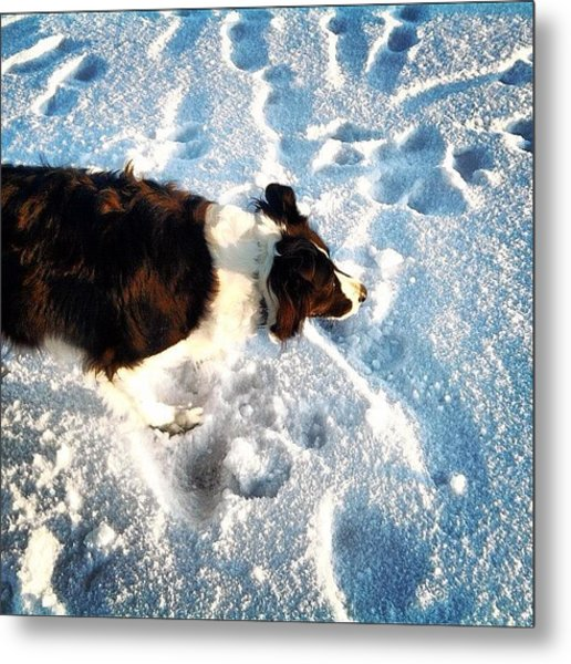 #dog #snow #winter #lake #scotland Metal Print