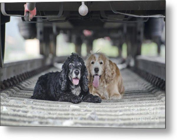 Dogs Lying Under A Train Wagon Metal Print