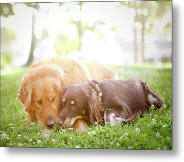 Dogs Snuggling Outside Being Cute Metal Print by Jessica Trinh