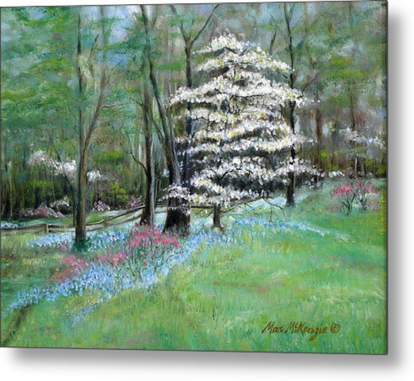 Dogwood In Springtime Metal Print by Max Mckenzie