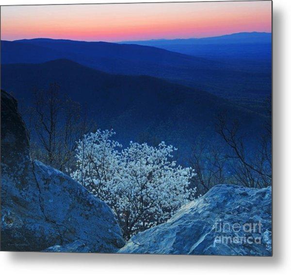 Dogwood Spring Sunset Blue Ridge Parkway Metal Print