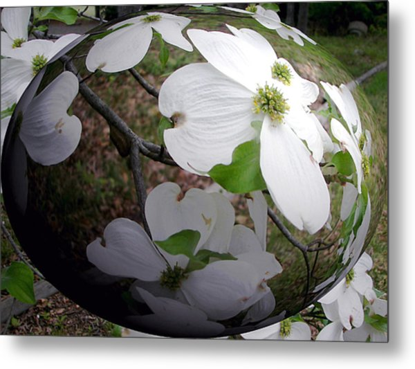 Dogwood Under Glass Metal Print