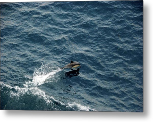 Metal Print featuring the photograph Dolphin Dive  by Ralph Jones