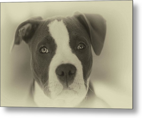 Don't Hate The Breed Metal Print