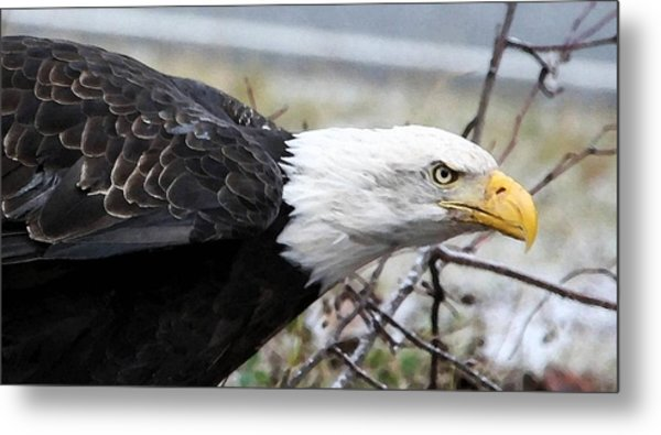 Don't Mess With Me Metal Print by Carrie OBrien Sibley