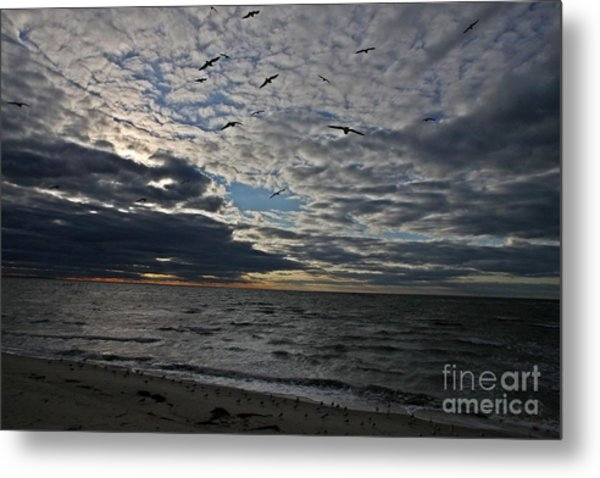 Dottie's Flight Metal Print by Scott Allison