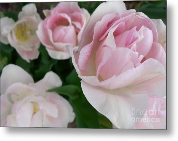 Double Pink Metal Print