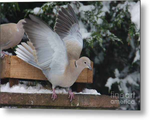 Dove On The Wing Metal Print
