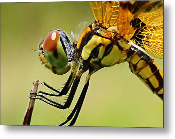 Dragon Fly Metal Print by Michelle Armstrong