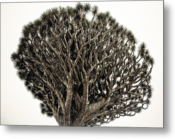 Dragon Tree Metal Print