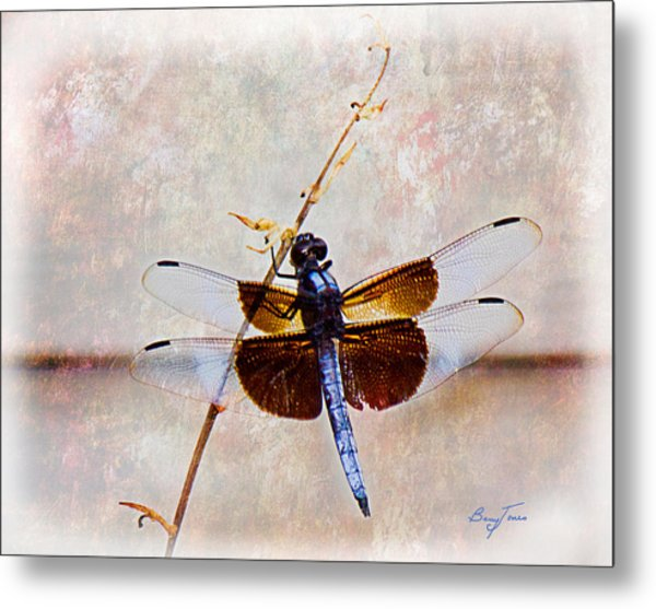 Dragonfly Clinging Metal Print by Barry Jones