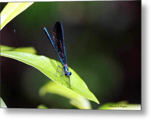 Dragonfly Fly Metal Print